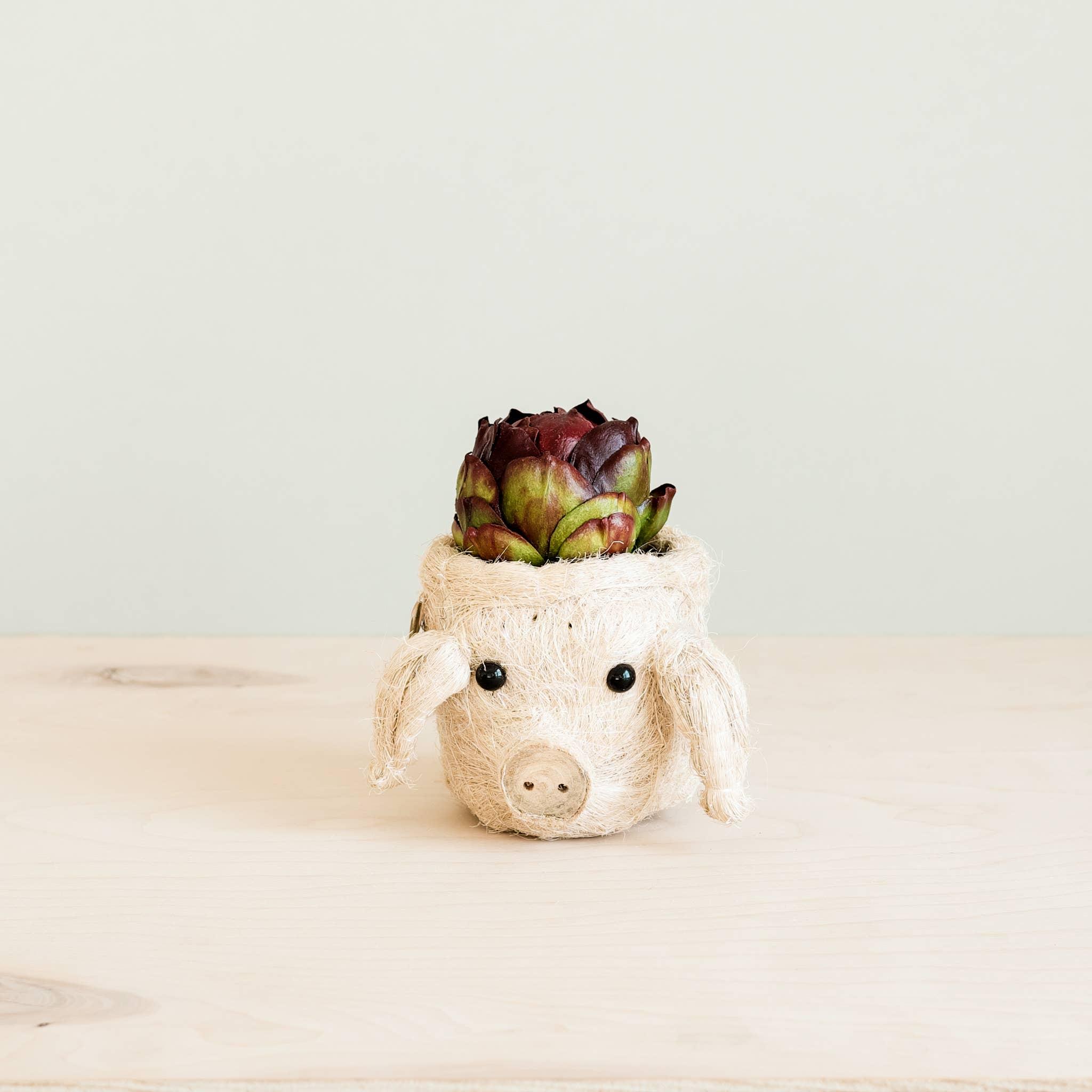 Animal Planter - Mini Pot Pig | Trada Marketplace