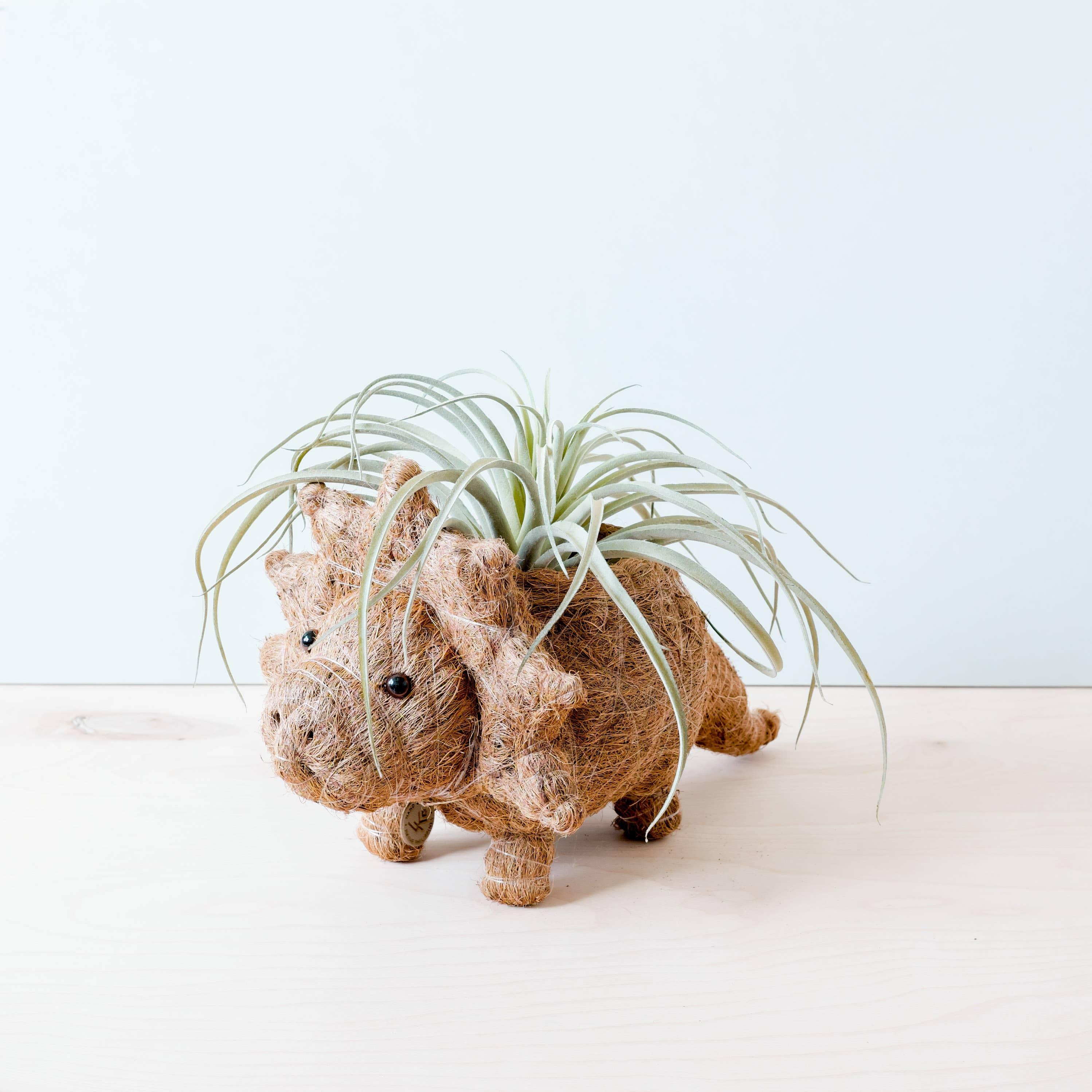Animal Planter - Triceratops | Trada Marketplace
