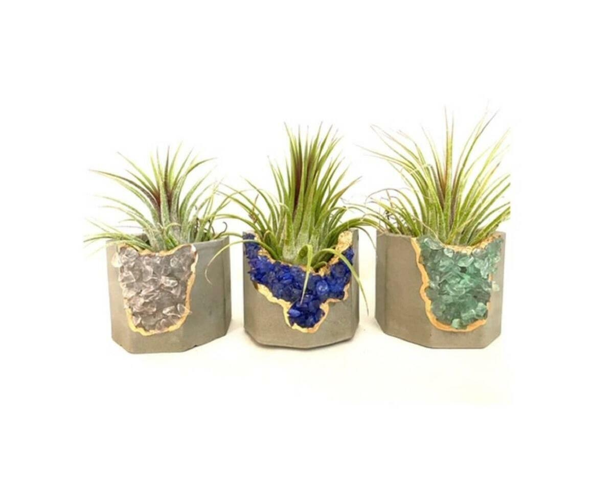 Geode Planter with Air Plant - Mixed Color   Trada Marketplace