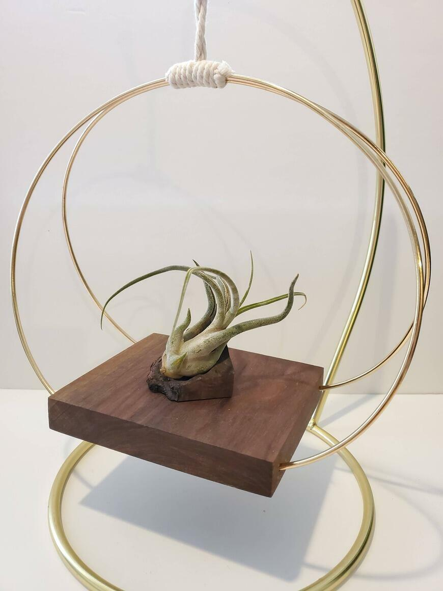 Brass and Walnut Plant Display Shelf | Trada Marketplace
