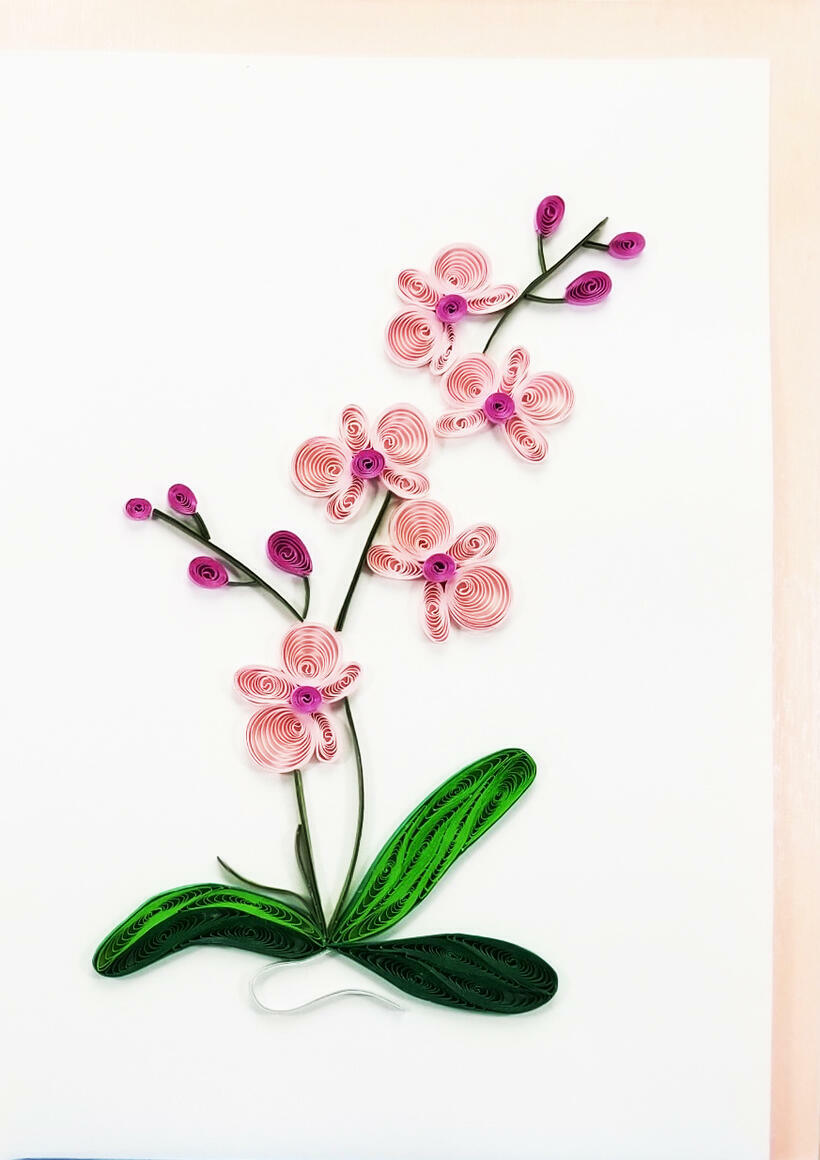 Pink Orchid   Trada Marketplace