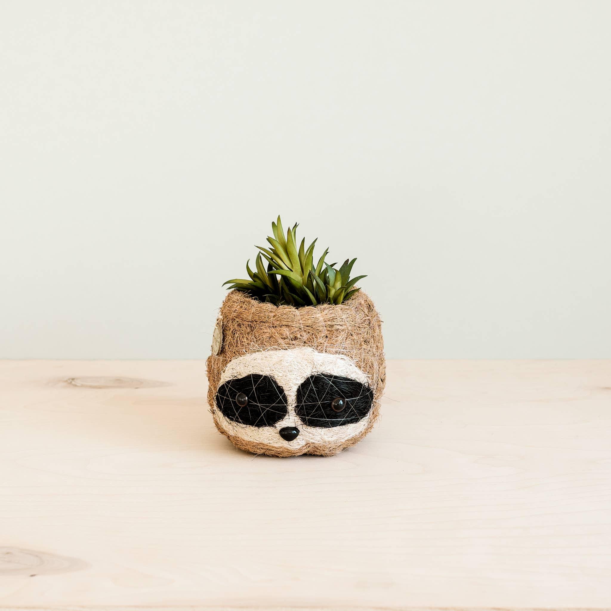 Animal Planter - Mini Pot 3-color Sloth | Trada Marketplace