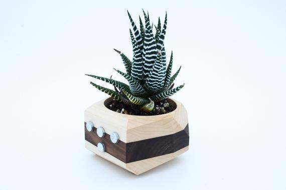 Magnet Wooden Planter | Trada Marketplace