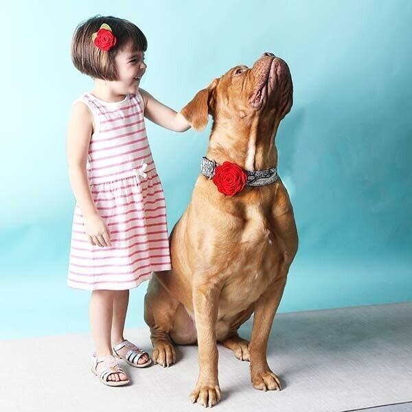 Mimi Green Dog Collars | Trada Marketplace