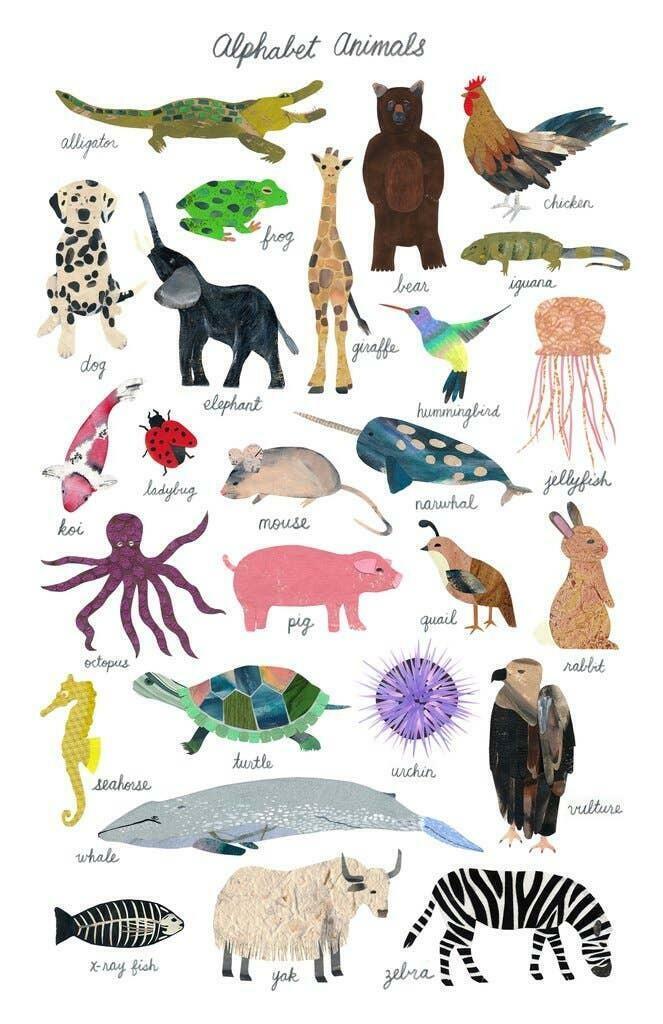 Alphabet Animals Print   Trada Marketplace