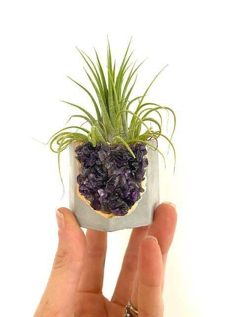 Raw Amethyst Crystal Concrete Planter with Air Plant   Trada Marketplace