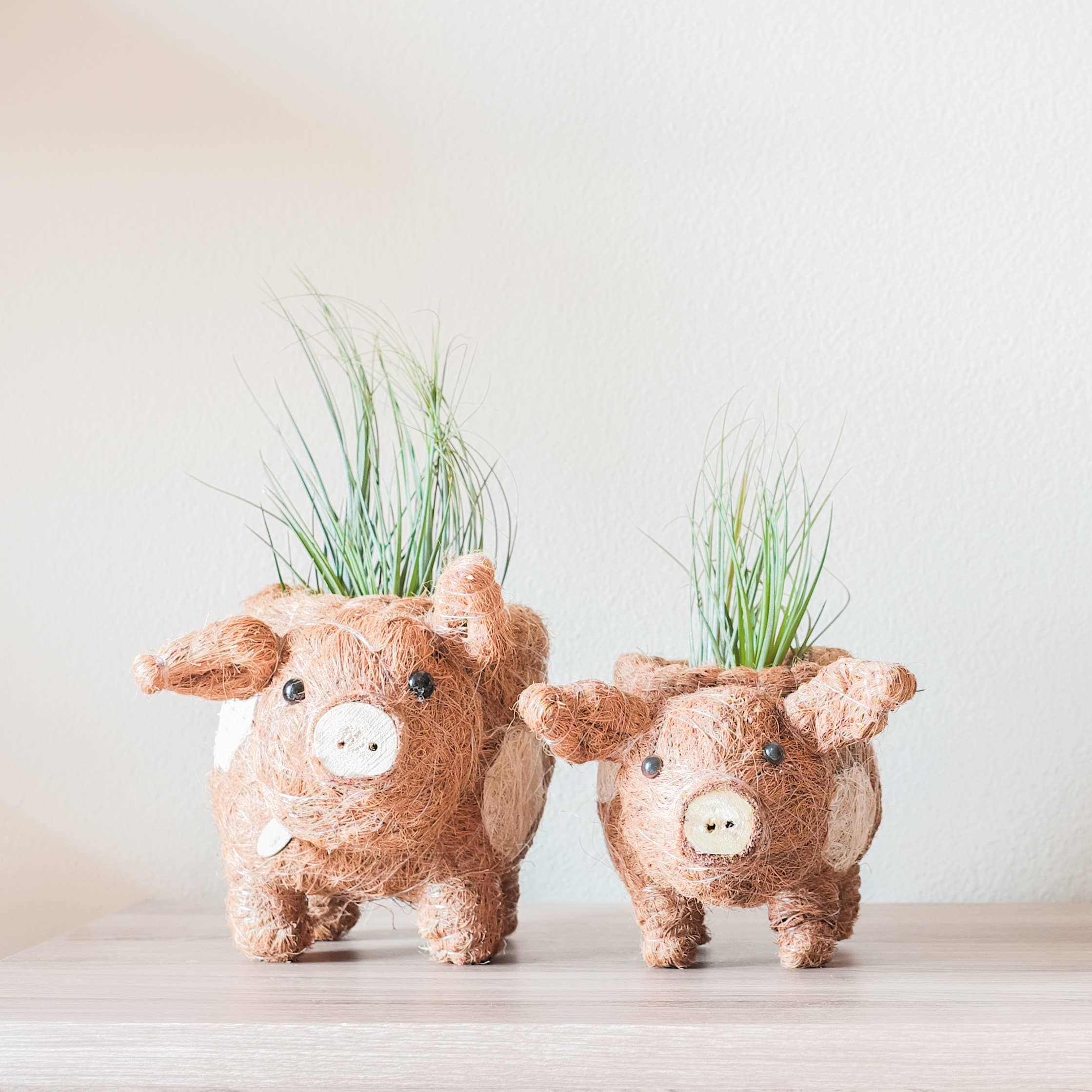 Animal Planter - Baby Pig | Trada Marketplace
