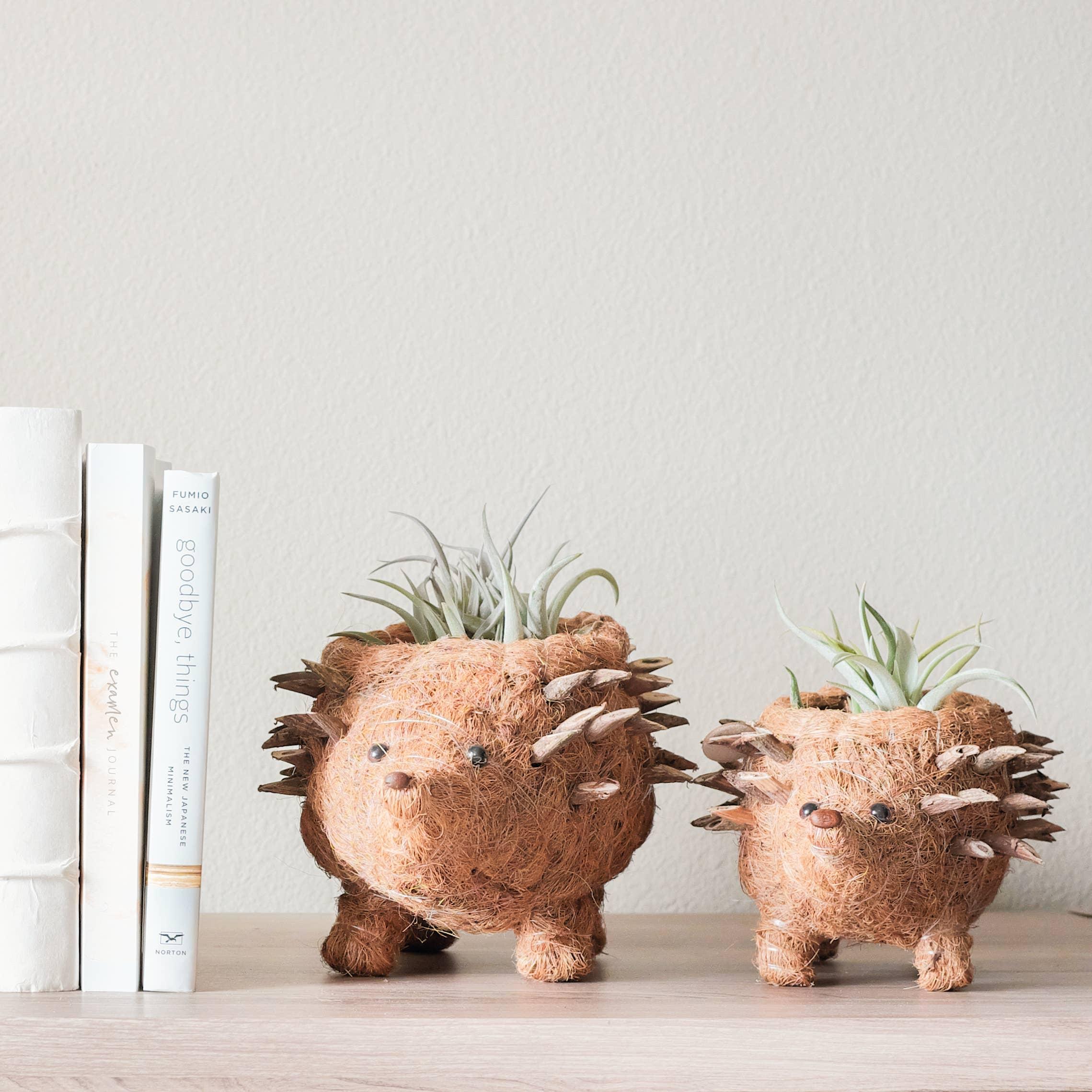 Animal Planter - Baby Hedgehog | Trada Marketplace