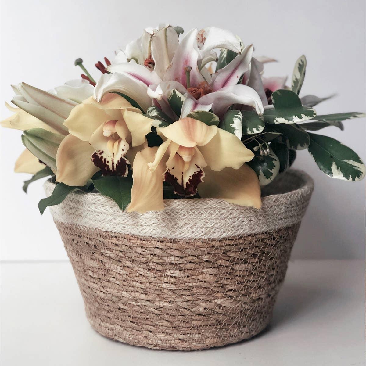 Savar Plant Bowl (Set of 3) | Trada Marketplace